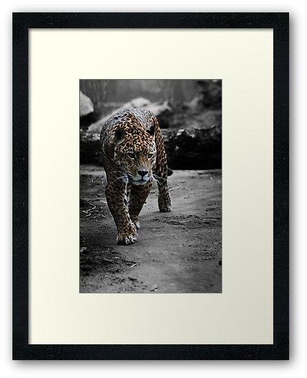Jaguar on the Hunt by CelticOrigins