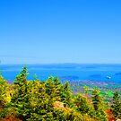 Bright Maine coast by LichenRockArts