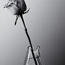 Pink Rose by Arkadiy Chernov
