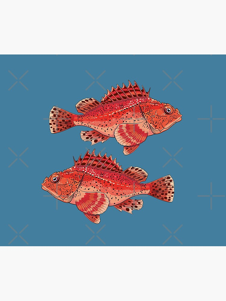 sea fish grouper red ugly by duxpavlic
