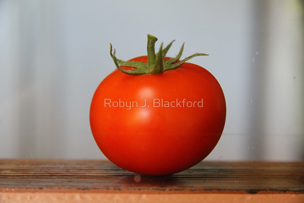 One Tomato by aussiebushstick