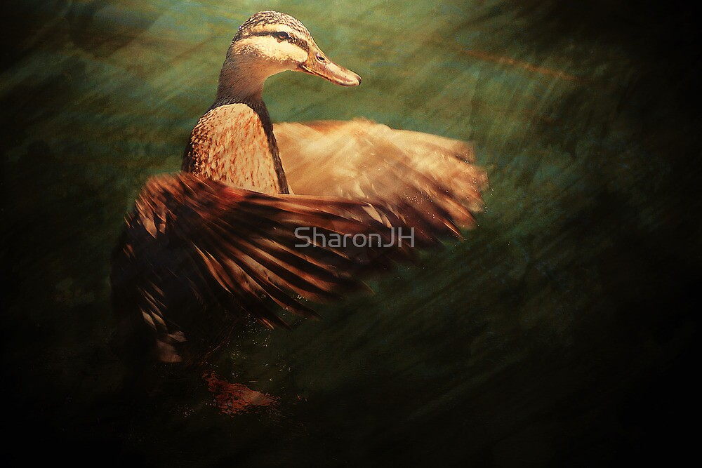 Like A Duck Out Of Water .... by SharonJH