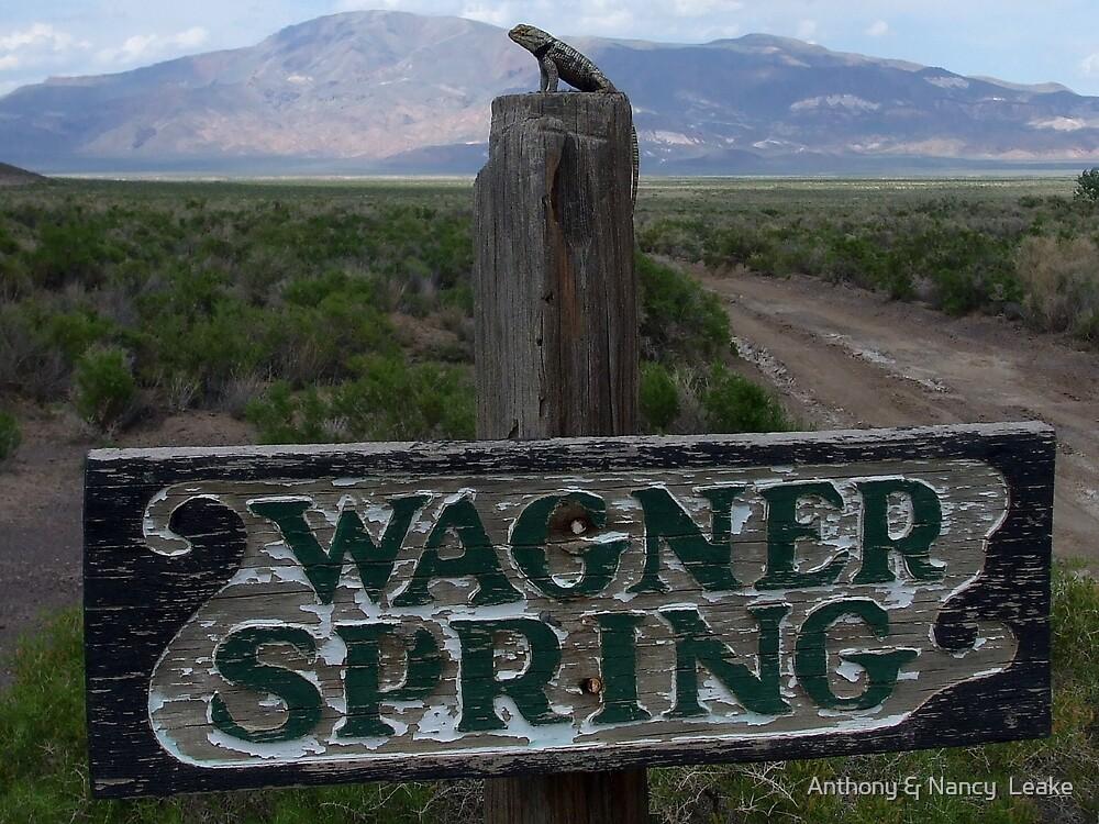 Lizard on Wagner Spring,Black Rock Desert,outside Gerlach,NV USA by Anthony & Nancy  Leake