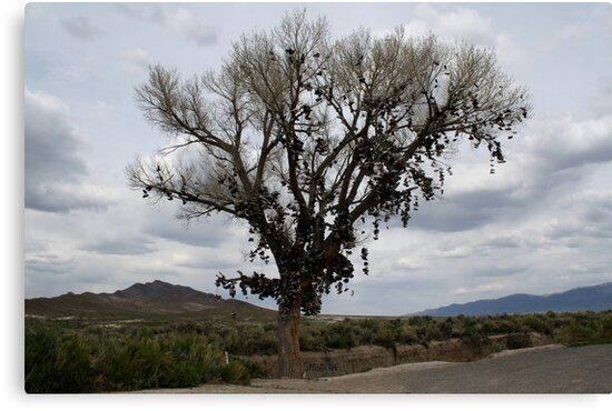 The Shoe Tree,outside Fallon Nevada,USA by Anthony & Nancy  Leake