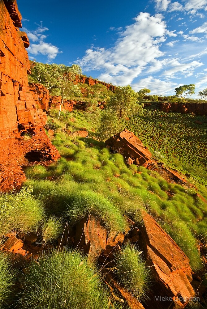 Sunkissed Spinifex by Mieke Boynton