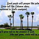 Psalms 92:13-14 by Paula Tohline  Calhoun