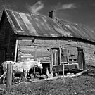 An Old Horse and An Old House by georgiaart1974