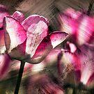 Red tulips.  by DaveBassett