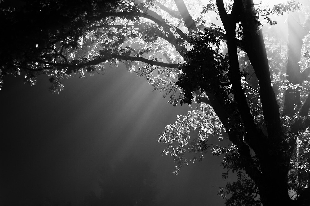 Night Watcher by Sabaa