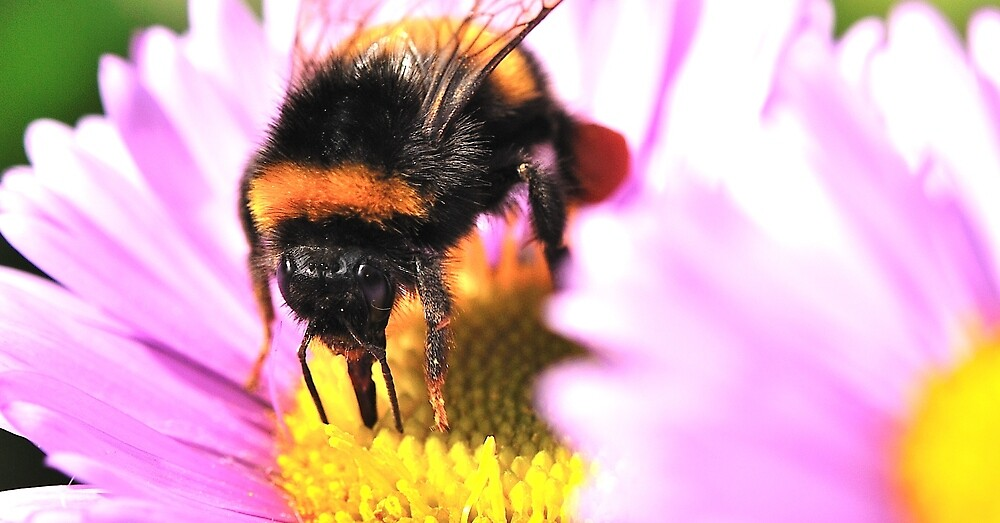 Busy Bee by Moments In Time Photography