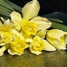 Spring Flower by Goldendays