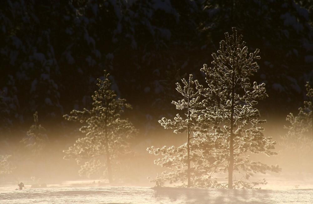21.1.2013: Cold, Beautiful Morning II by Petri Volanen