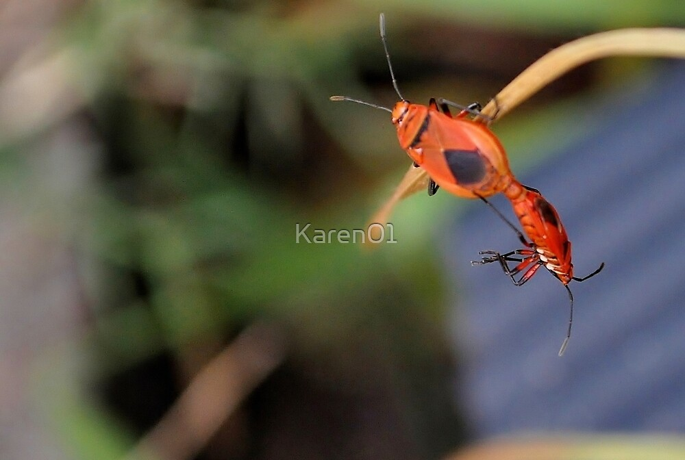 Bug Gymnastics by Karen01