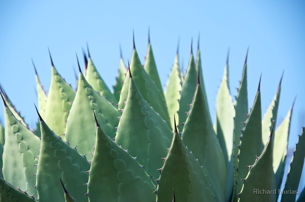 Agave by Richard Murias