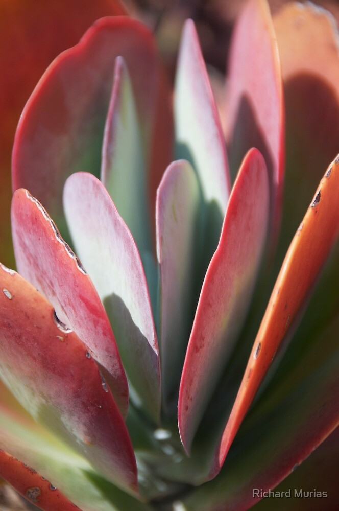 Succulent Paddles by Richard Murias
