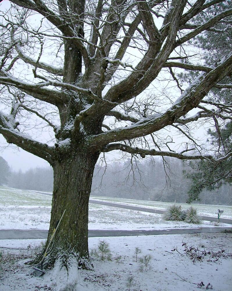 The Oak in Winter by Valerie Howell