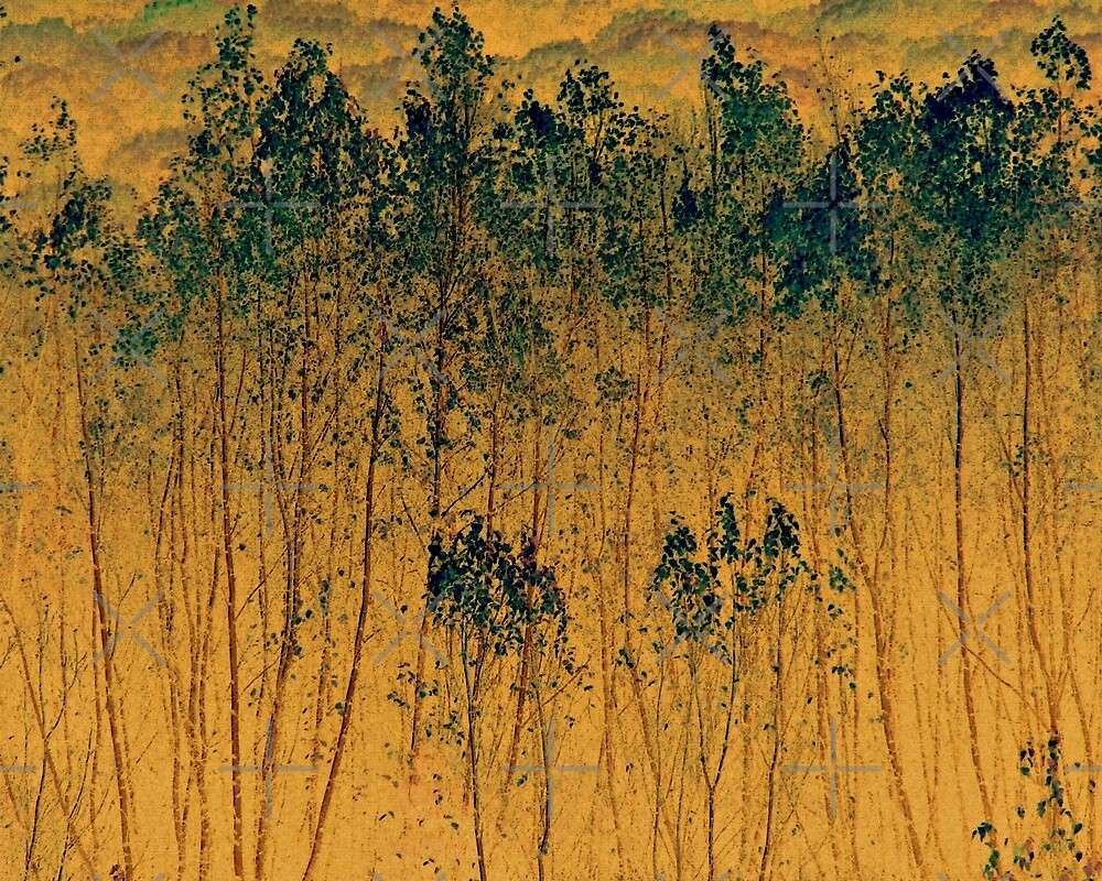 Poplar Trees Abstract by BavosiPhotoArt