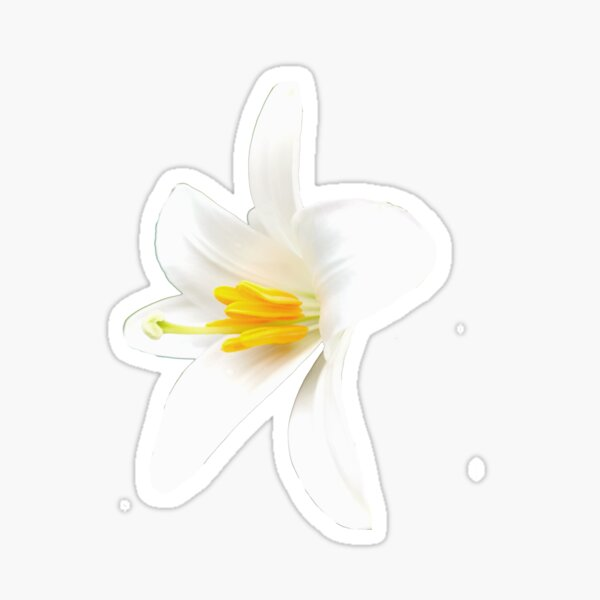 Isolated white lily Sticker