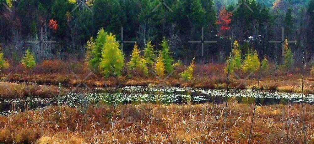New Hampshire Landscape l by BavosiPhotoArt