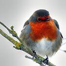 Little Robin  by larry flewers