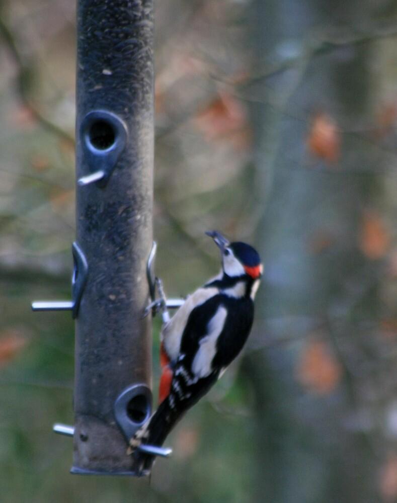 Woodpecker by Capriblue