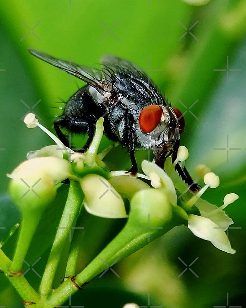 Fly by BavosiPhotoArt