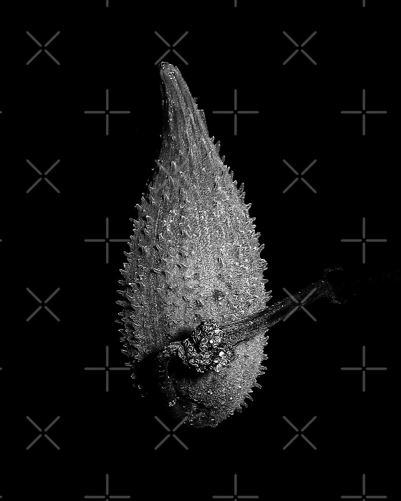 Milkweed Pod In Black and White by BavosiPhotoArt