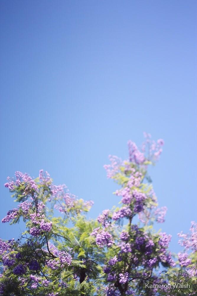 Jacaranda Tree by Kameron Walsh