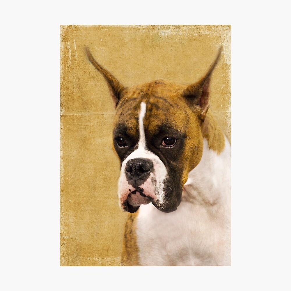 Those Ears Photographic Print