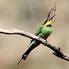 Down She Goes,  Rainbow Bee Eater with Lunch by Kym Bradley
