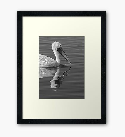 Pelican Reflection Framed Print