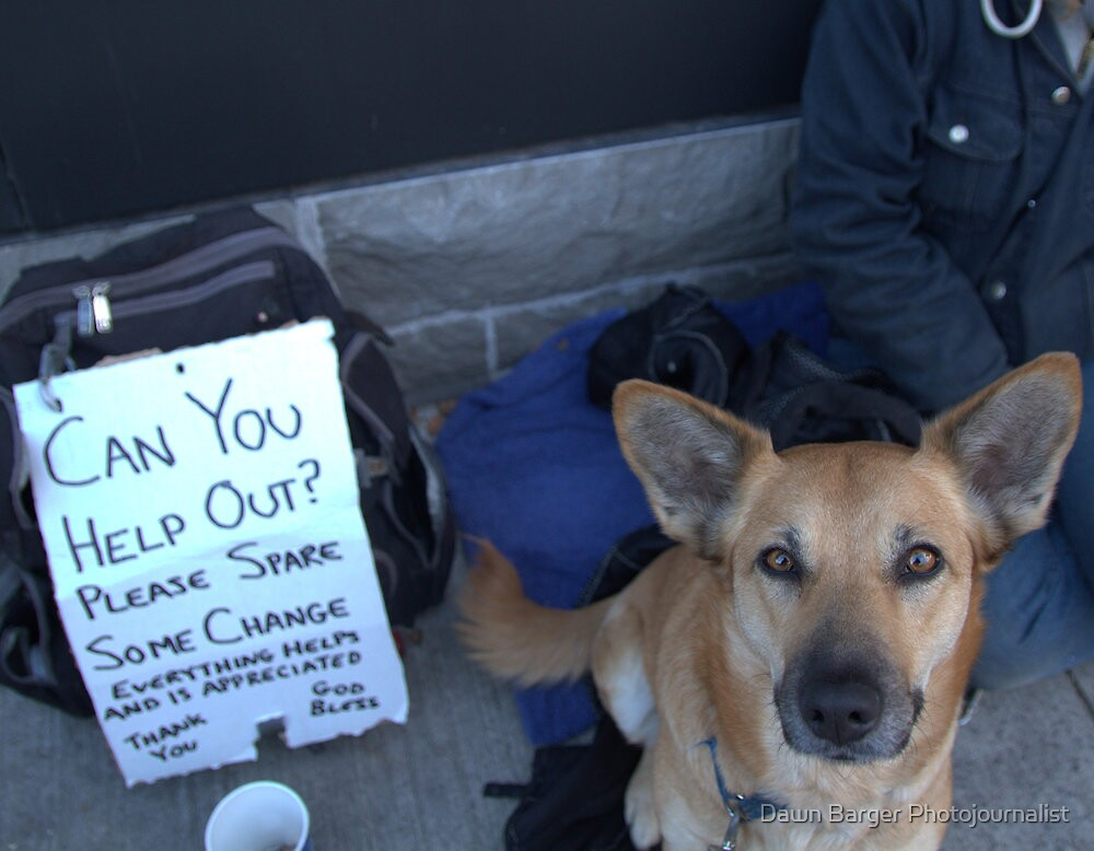 Puppy dog eyes by Dawn Barger Photojournalist