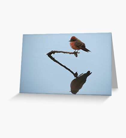 Vermilion Flycatcher (Reflections of Tranquility)  Greeting Card