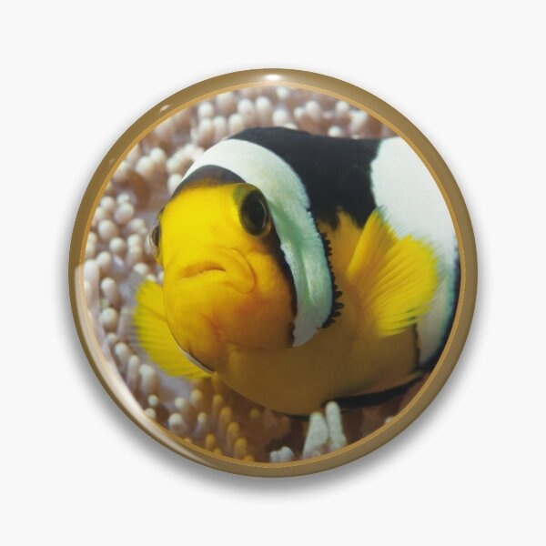 Anemonenfisch | Close Up! |  Button