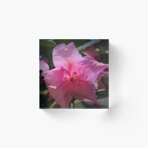 Rhody blossom Acrylic Block