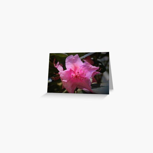 Rhody blossom Greeting Card