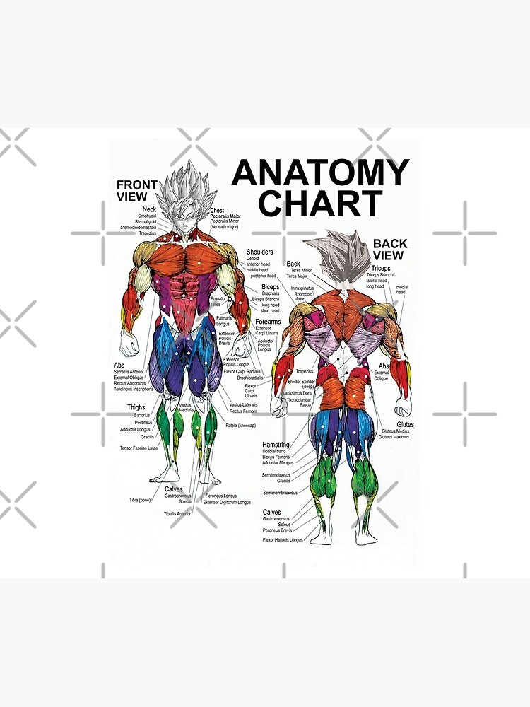 Anatomy Muscle Chart Diagram by gohanflex