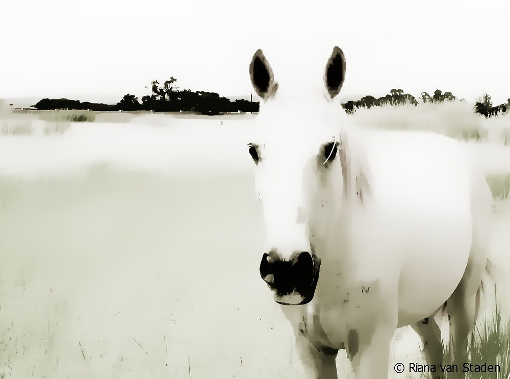 White Horse by Riana222