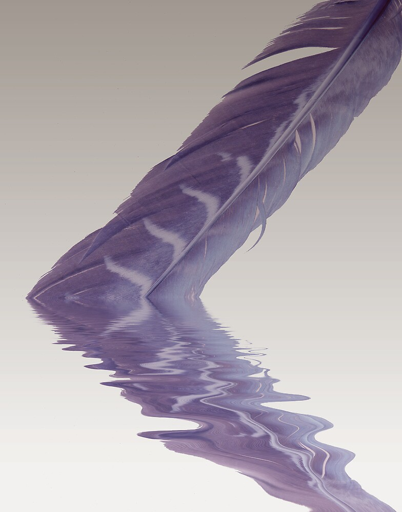 Feather Reflection by wingtip