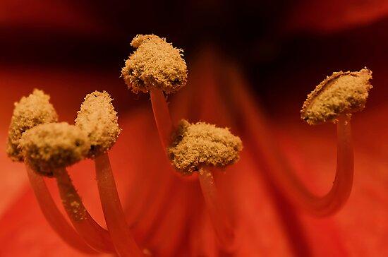 pollen by clayton  jordan