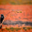 Loner by Sagar Lahiri