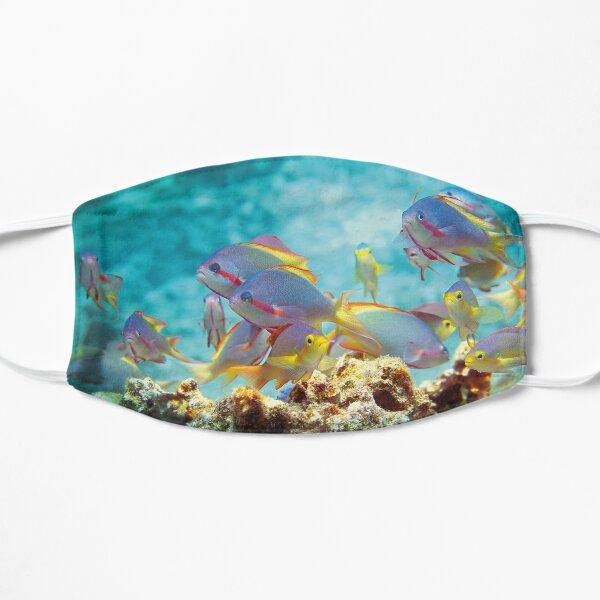 Fahnenbarsche | Buntes Treiben im Korallenriff |  Flache Maske