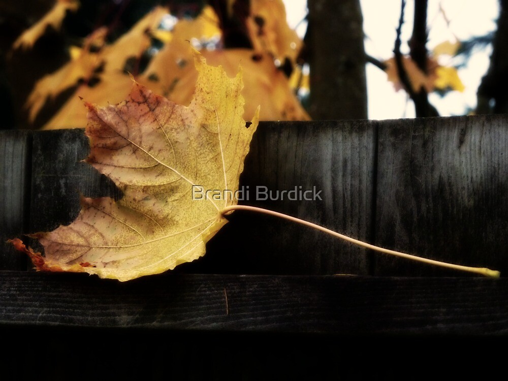 holding on~ by Brandi Burdick