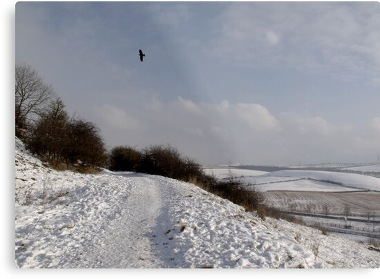 Snowscape by Carol Bleasdale