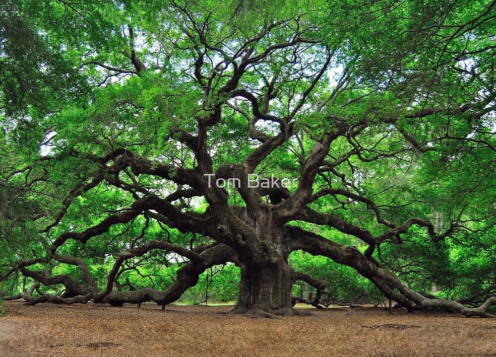 Angel Oak by Tom Baker