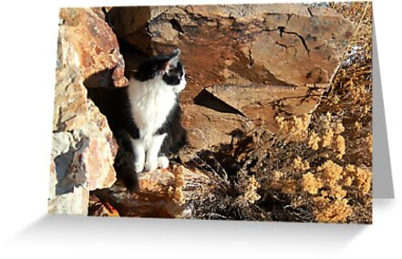 Angel On The Rock by Arla M. Ruggles