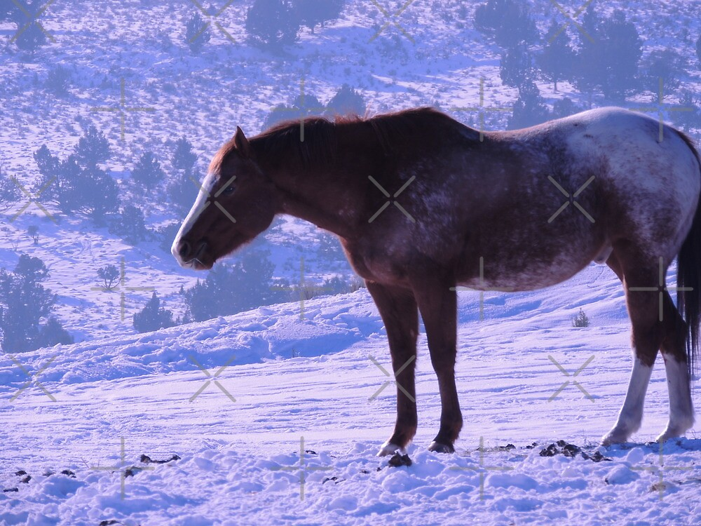 January's Horse by Betty  Town Duncan