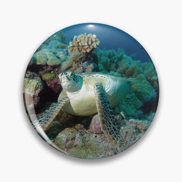 Meeresschildkröte | Rast im Korallenriff |  Button