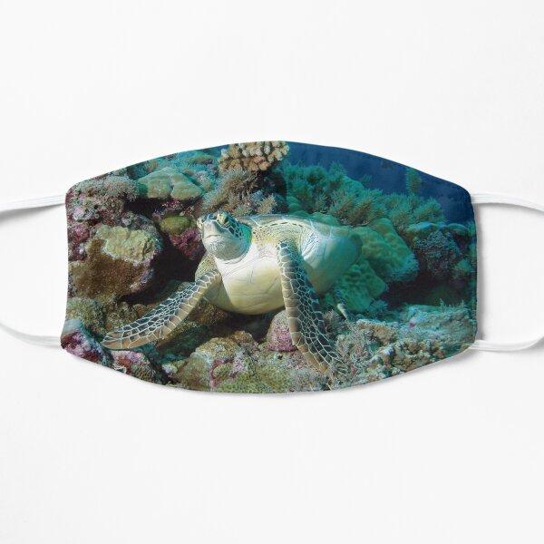 Meeresschildkröte | Rast im Korallenriff |  Flache Maske