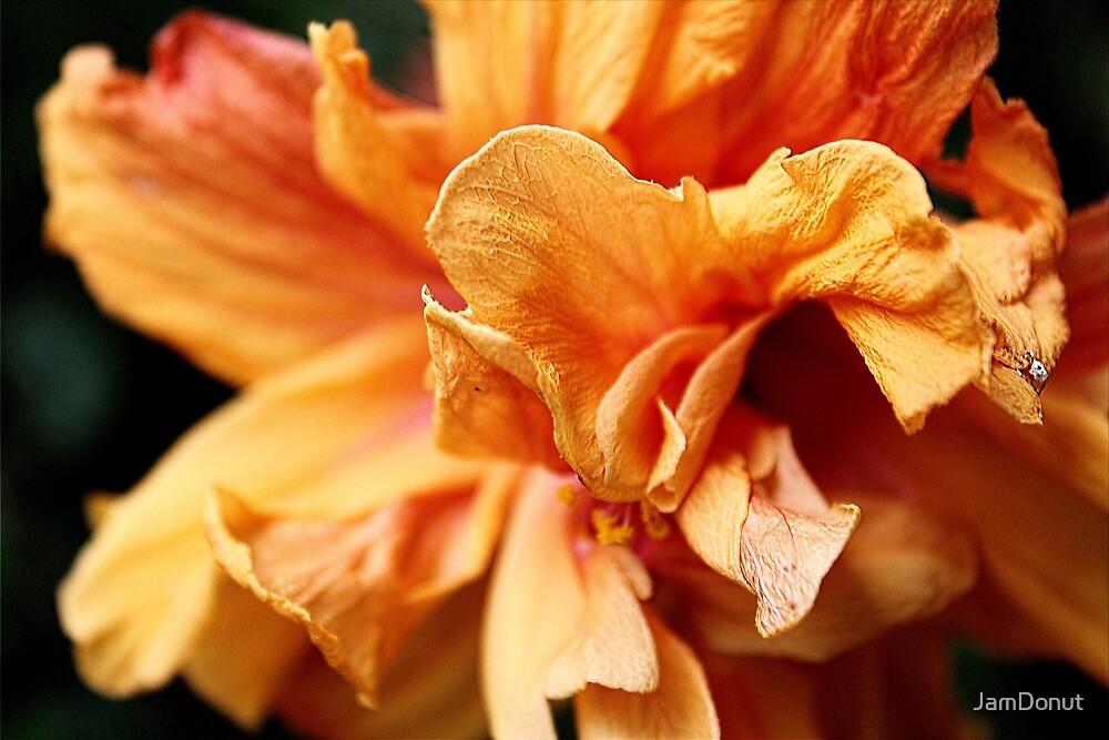 Hibiscus by JamDonut